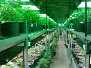 Image: Creative Commons